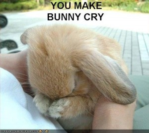 Photo of sad bunny