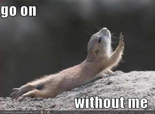 Photo of dramatic chipmunk