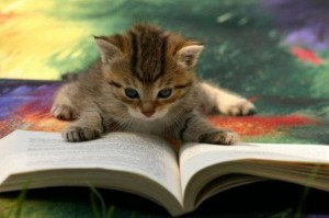 Photo of kitten reading
