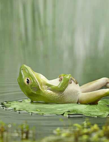 Photo of contented frog
