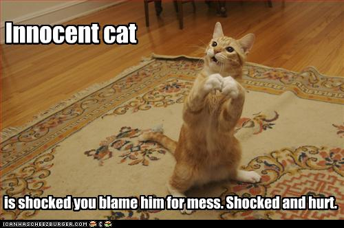 Photo of cat not accepting blame