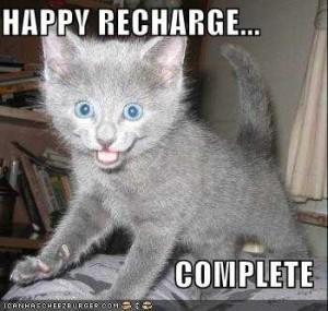 Photo of happy cat