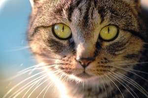Photo of intuitive cat