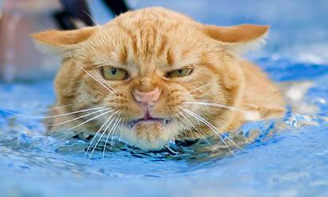 Photo of cat hating the water