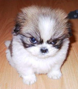 Photo of angry puppy