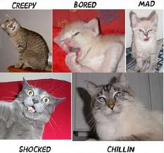 Silly lolz of cat emotions