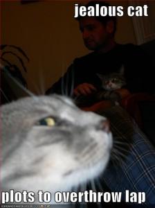 Photo of jealous cat