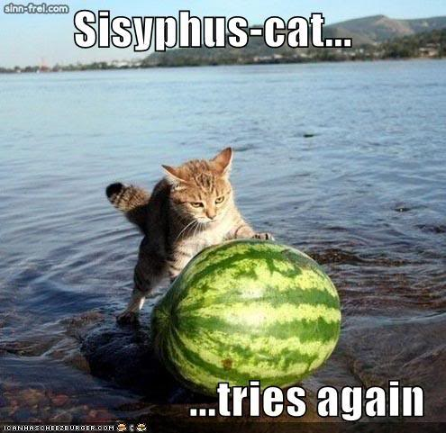 Sisyphus cat rolls watermelon