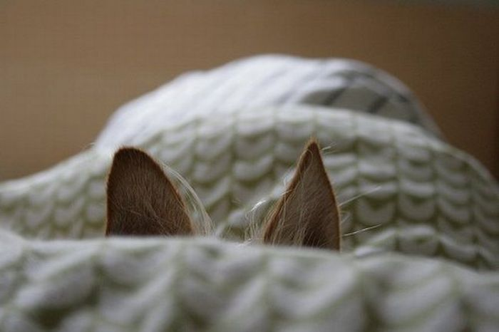 photo of cat ears orienting to sound