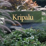 Kripalu Logo Square 640px
