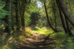 Photo of a path in the forest